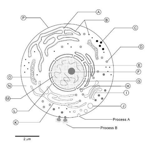 cell structure diagram quiz cell structure diagram quiz 28 images biology diagram