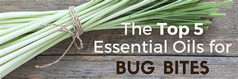 essential oils for bed bug bites top 5 essential oils for bug bites mosquito spider