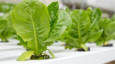 lade idroponica lade coltivazione indoor coltivare indoor con lade per