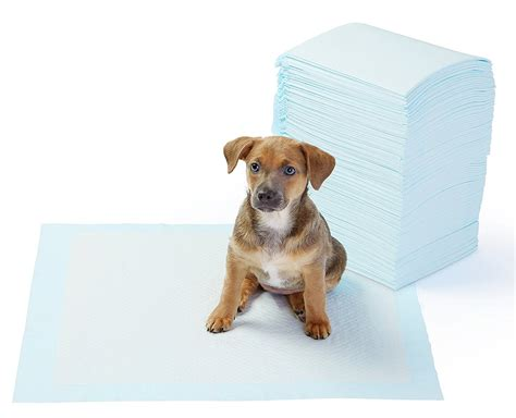 pads for puppies best potty pads for dogs reviews best top care with dogs