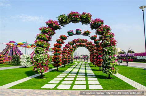 magical flower garden dubai miracle garden the most beautiful and largest