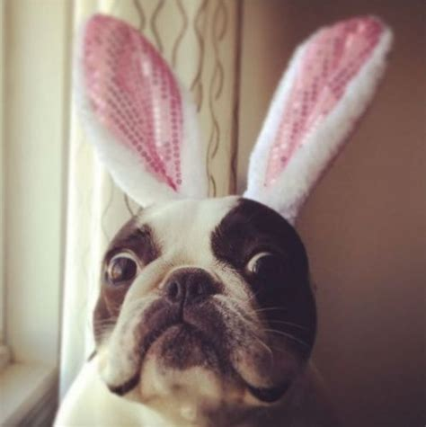 bunny ears for dogs happy easter bunny ears