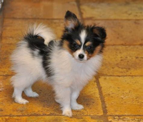 small dogs that are easy to house train how to pick the best smart small dogs that are very easy