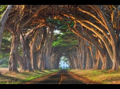 the prettiest tree in the world top 20 most beautiful trees in the world