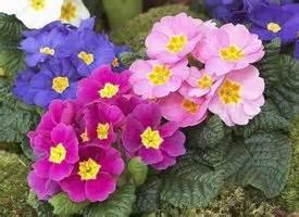 fiori particolari da giardino fiori particolari piante perenni fiori particolari