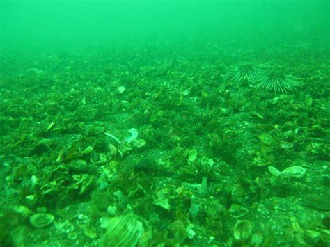 enrejados que significa ecosistemas marinos taringa