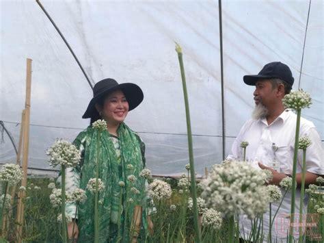 Bibit Bawang Merah Bantul titiek soeharto kembangkan benih atasi impor bawang