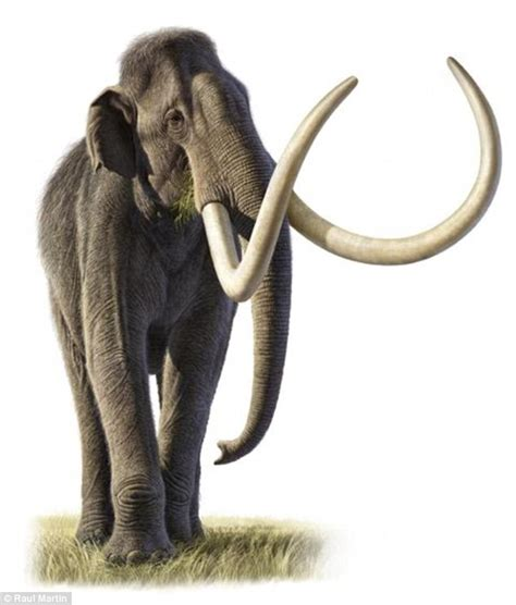 Jo In Toys Molar woolly and columbian mammoths interbred as their habitats