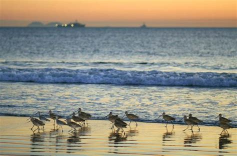 friendly beaches san diego 7 best family friendly beaches in the us fodor s travel