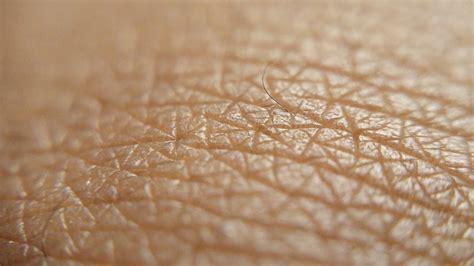 texture of human skin and scratch up macro stock photo colourbox 191 cu 225 les las funciones de la piel 187 respuestas