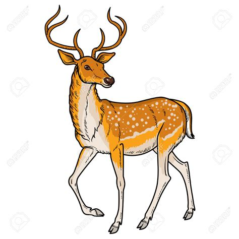 clipart deer deer clipart pencil and in color deer clipart