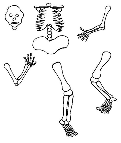 skeleton template clipart best