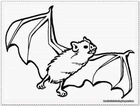 bat coloring page realistic bat coloring pages realistic coloring pages