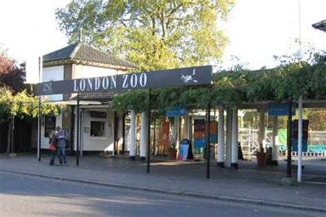 Home Design Courses Uk by Disabled Visitor Suing London Zoo For 163 300k After Staff