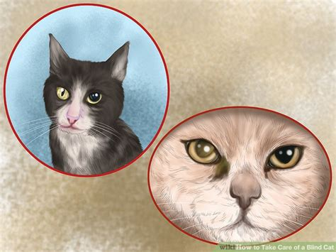 Signs Of Blindness In Cats how to take care of a blind cat 10 steps with pictures
