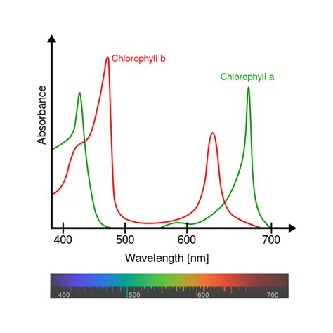 the absorption of light by photosynthetic pigments worksheet answers does the light color spectrum and frequency matter for