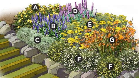 perennial garden plans zone 3 best 25 daylily garden ideas on lilies day