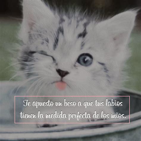 imagenes lindas de gatitos con frases 10 im 225 genes de gatitos tiernos con frases lindas para