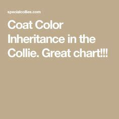 143 Best Collie Colors Coat Color Inheritance Images In