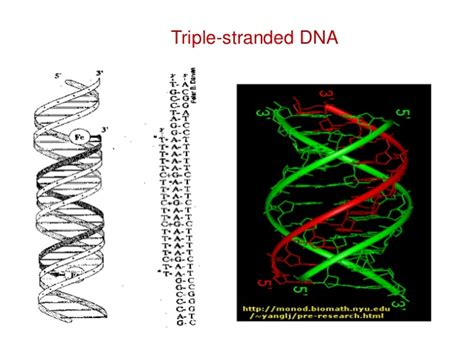 triple helix dna nucleic acid chemistry