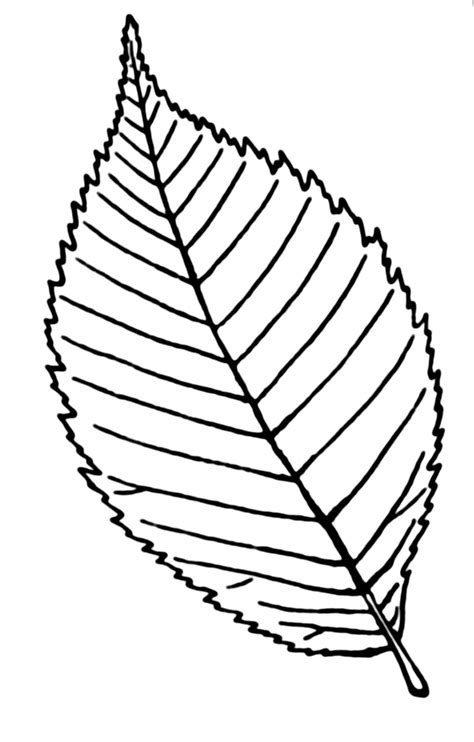Drawing Leaves by Leaf Line Drawing Clipart Best