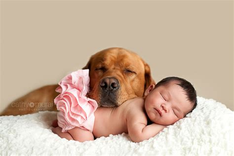 best dogs for small children 22 big dogs caring for