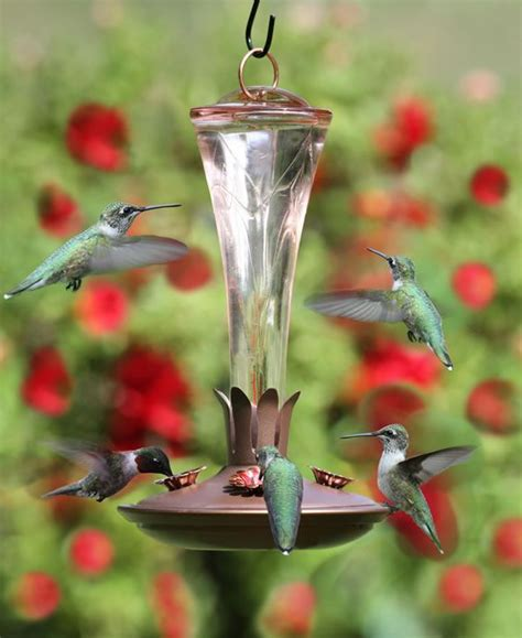 hummingbird feeders gt bird feeders gt hummingbird