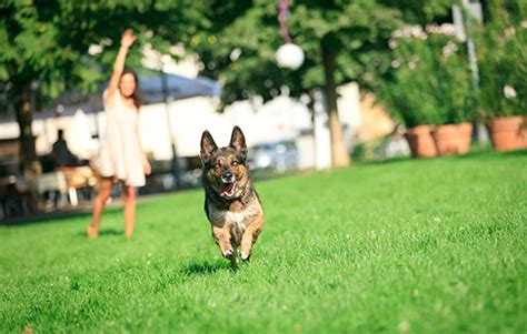 puppy playtime summer playtime with your pet health central