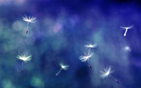 Qw Wallpaper Dandelion Pink dandelion flowers wallpapers hd pictures one hd wallpaper pictures backgrounds free