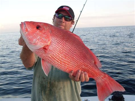 florida saltwater boating regulations best 25 saltwater fishing ideas on pinterest tying