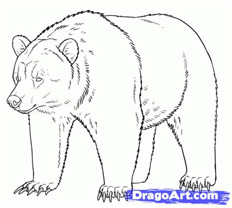 how to draw grizzly bears