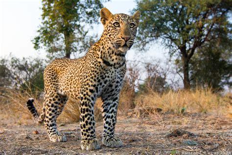 burrard lucas wildlife  px