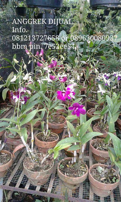 Pot Anggrek Kayu Ulin jual pohon anggrek murah tukang taman minimalis murah