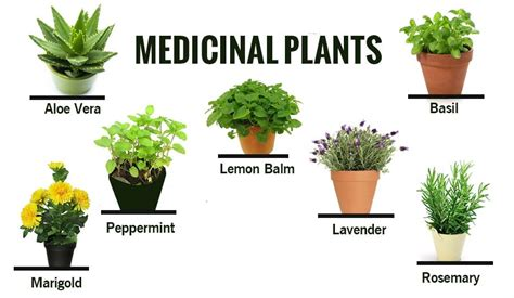 How To Make An Indoor Herb Garden by Herbal Amp Medicinal Plants And Their Uses Acegardener