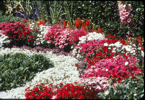 fragrant bedding plants add fragrance to your cool season flower beds lsu agcenter