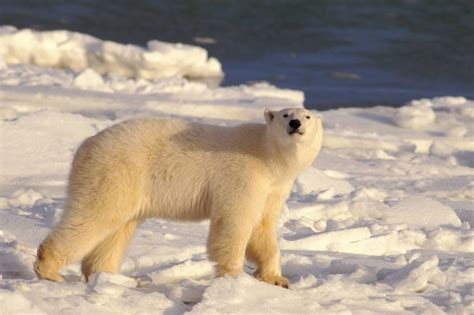 the of all polar tours cape churchill