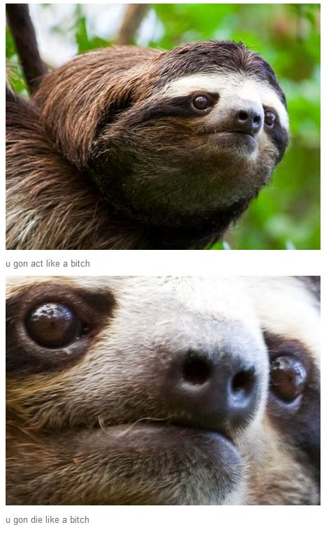 Fitness Sloth Meme - nightmare before christmas meme
