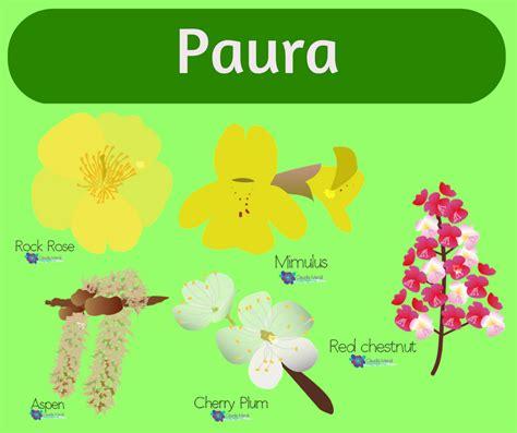 fiori di bach paura marsili floriterapeuta i fiori di bach i 7