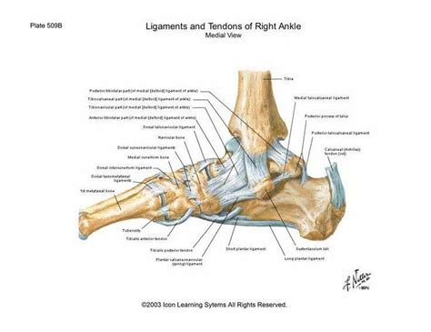 partial knee ligament tears acl mcl pcl causes and treatments
