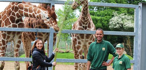 discount vouchers yorkshire wildlife park 2015 olympian gold medalist jessica ennis hill walks tall at