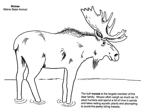 michigan wildlife a coloring field guide books maine of state page