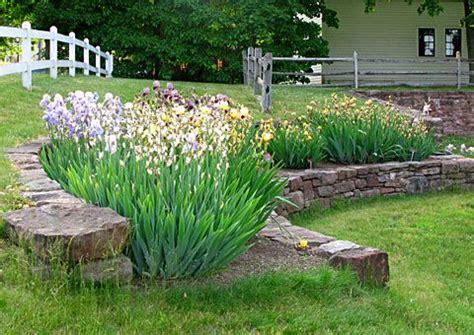 iris flower garden pretty iris flower bed idea iris