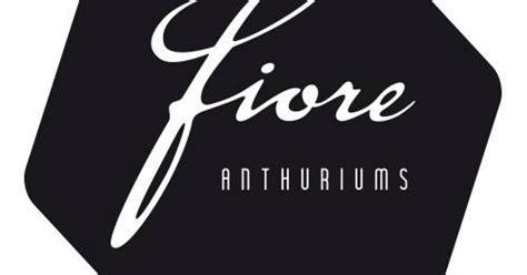 fiore anthurium fiore anthuriums flower factor