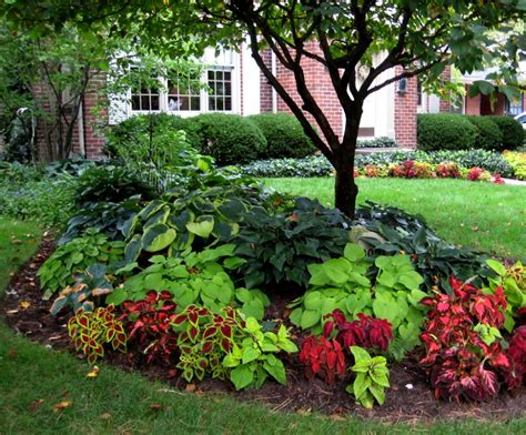Landscaping Around Trees Plants Ideas Interesting Design Plants For Front Garden Ideas