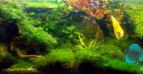Pupuk Dasar Aquascape Murah aquascape itu murah simple aquascape