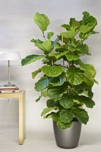 houston s online indoor plant pot store extra large 36 best images about showroom plants on pinterest office
