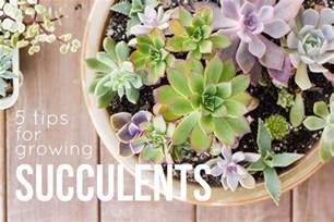 5 succulent care tips for happy healthy succulents