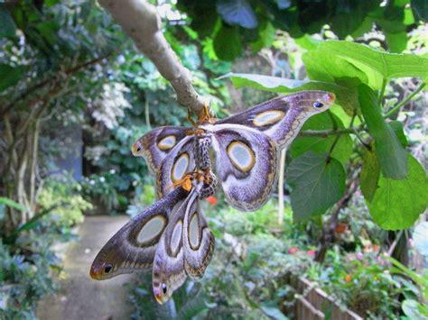 giardino farfalle casa delle farfalle al giardino garzoni di collodi pt