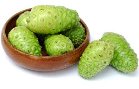 Tanaman Buah Mengkudu manfaat buah mengkudu rahasia kesehatan kuno