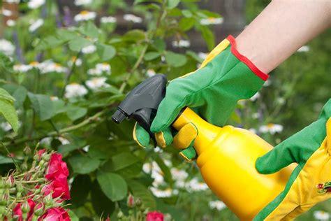 easy homemade garden pesticide options survivalkitcom